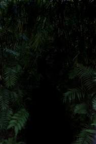 black forestttvf